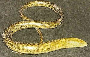 желтопузик змея фото